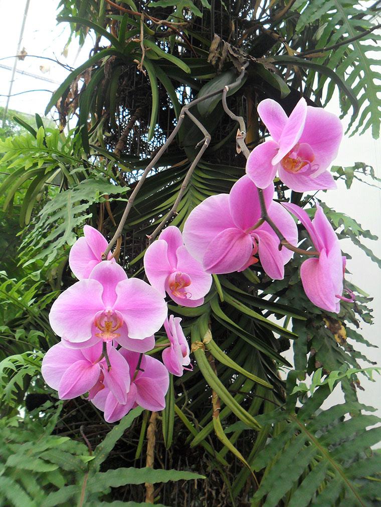 uzivanje-u-okeanu-od-dva-miliona-orhideja-005