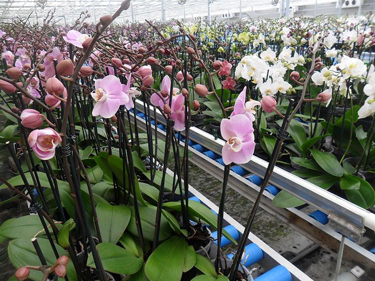 uzivanje-u-okeanu-od-dva-miliona-orhideja-006