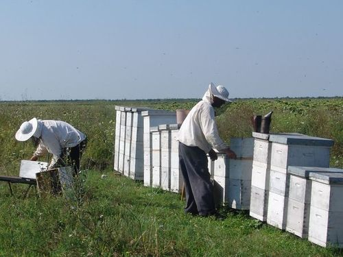 Subvencije za pčelare povećane na 800 dinara po košnici