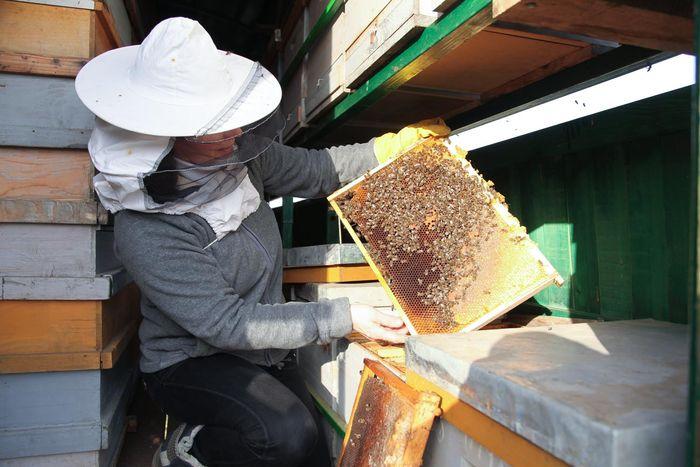 Pčelarka na svom radnom mestu
