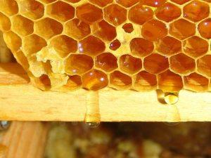 Vrcanje bagremovog meda