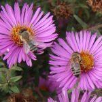 Berlinska katedrala postala dom za oko 30.000 pčela