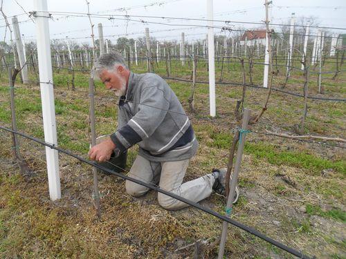 Prolecno uredjivanje viniograda