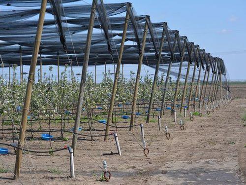 Zaštititi zasade jabuka i koštičavog voća pre najavljenih padavina