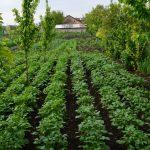 Osnovan prvi istraživački centar ekološke poljoprivrede u Srbiji