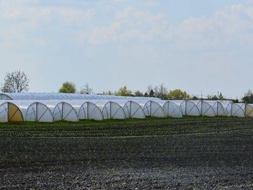 Zašto je važno dezinfikovati zemljište i kako to uraditi