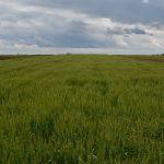 Delegacije EU u Srbiji: Ostvaren napredak u oblasti poljoprivrede