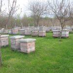 Higijena pčelarenja: Čist i uređen pčelinjak je obaveza svakog pčelara