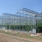 Uspešna proizvodnja povrća u zaštićenom prostoru – preduslovi