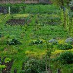 Biobašta – sklad čoveka i prirode