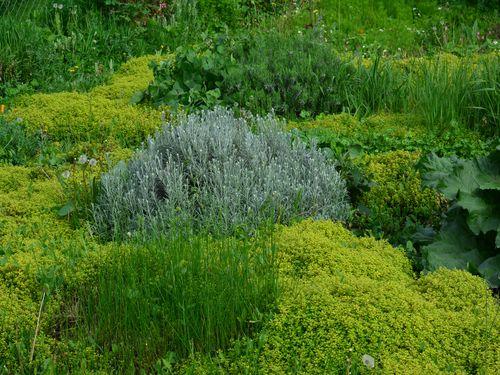Mirisi i boje lekovitih i začinskih biljaka