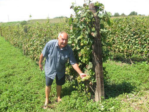 Rade Ostojin u vinogradu