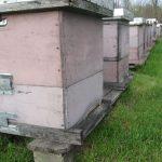Pčelinjak u oktobru: Završiti sve započete poslove i pripremu pčele za zimu