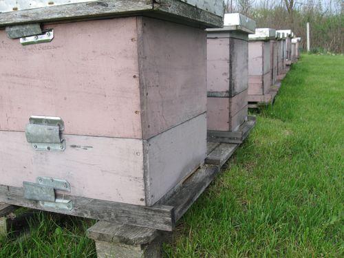 Radovi na pčelinjaku u avgustu