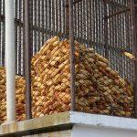 Procene USDA: Najveći pad proizvodnje se beleži u Srbiji