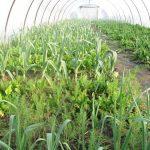 Dodatno vreme za prijavu projekta iz oblasti organske proizvodnje