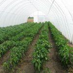 Podržati mlade dame koje se bave poljoprivredom
