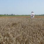 Kupovina njiva u Rumuniji