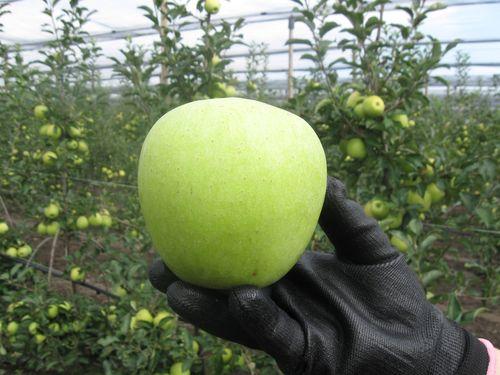 jabuka krupno