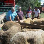 Oporavak ovčarstva moguć ako se u posao uključe mladi