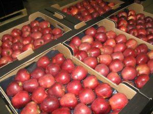 jabuke u kartonskim gajbicama