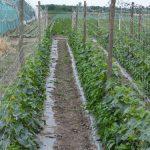 Đubrenje povrća – saveti za predsetveno đubrenje i prihranu