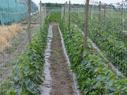 Proizvodnja povrća – Kako pripremiti zemljište?