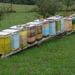 Pčele ne vole vlagu u košnici i ona im ne prija