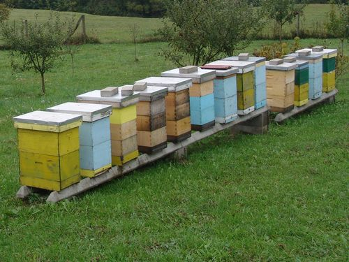 Bespovratna sredstva za nabavku pčela, košnica, opreme i uređaja…
