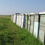 Letnje pčelinje paše