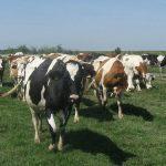 Kumane planira organizovanje farmerske zone