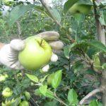 Gruža agrar organizuje savetovanje voćara