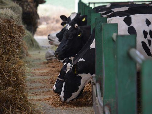 Farma goveda