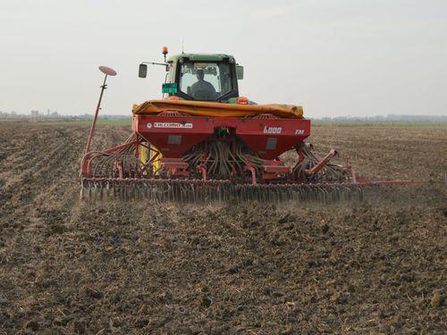setva pšenice