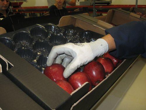 pakovanje jabuka