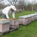 April na pčelinjaku