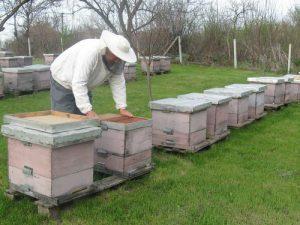 pčelar u pčelinjaku