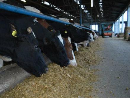 Za podsticaje za mašine i opremu u stočarstvu zahtev podneti do 15. juna