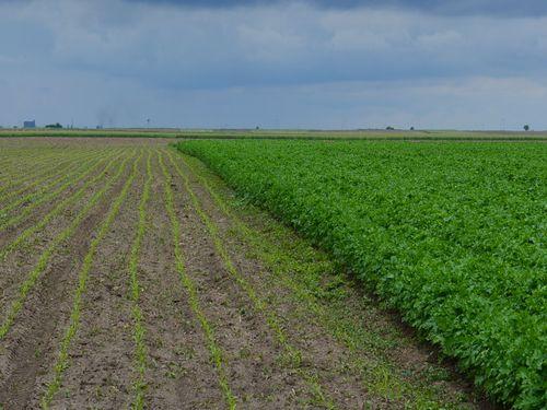 Kako kiselost zemljišta utiče na rast i razvoj biljke