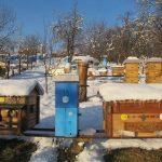 Radovi na pčelinjaku u februaru – Obratimo pažnju na sitnice