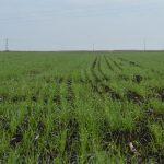 N – min metoda – Kada i kako uzorkovati zemljište?