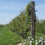 Upis u vinogradarski registar – korak po korak