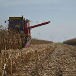 Sve smo bliži razvrstavanju žitarica po kvalitetu