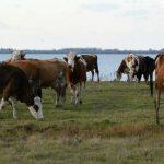 Organska stočarska proizvodnja: Ishrana domaćih životinja