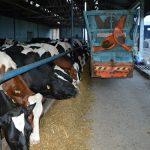 Ishrana sveže oteljenih krava