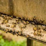 PKS – Potrebno je podsticati razvoj privrednog pčelarstva