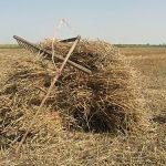 Zemljoradničko pitanje u Srbiji: Oskudica svake volje