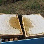 Radovi u pčelinjaku u maju