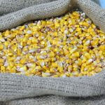 Biće obnovljena ponuda kukuruza za preostalu količinu od 7.500 tona