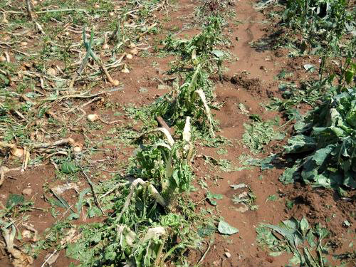 Osiguranje u poljoprivredi – Pravilnik za ostvarivanje prava